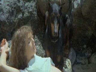 Love Story  (1976) xLx