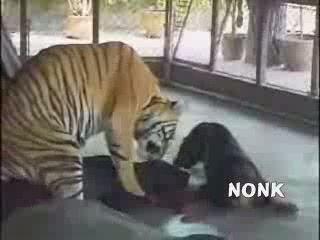 Tiger Fuck Dog