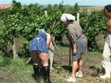 Village Granny Punished In a Vineyard By Young Farmer For Not Doing Job Well