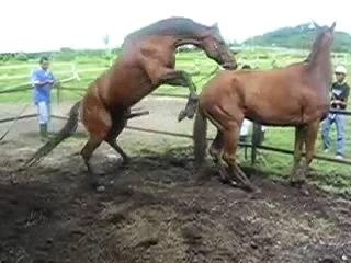 Animal Horse Porn Video